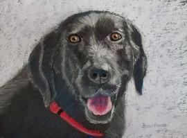 Happy Face Labrador