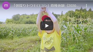 トウモロコシYouTube.jpg