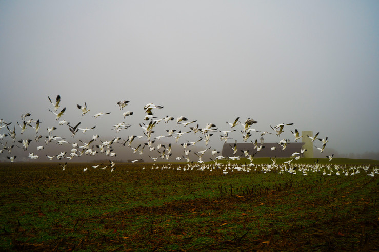 foggy birds 1.jpg