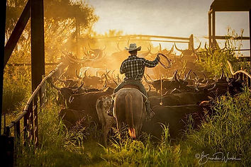 Cowboy & Indians Magazine winning photo in the Western Category by ©Brenda Weeks