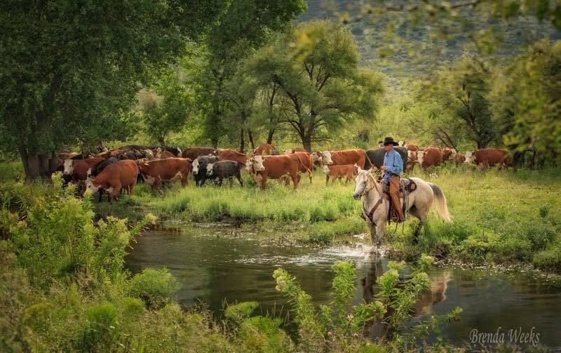 Crossing the Herd