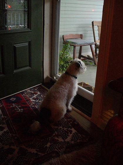 Snickers looking out door- Nov 21, 2011.