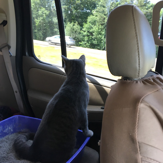 Ned doing double duty; no, he was just looking out the window and the litter box just happened to be there.