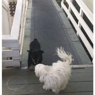 Rolo and Lily loved running up and down the ramp.