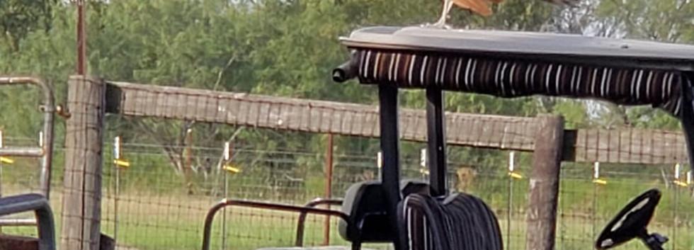 Mr. Peabody on golf cart