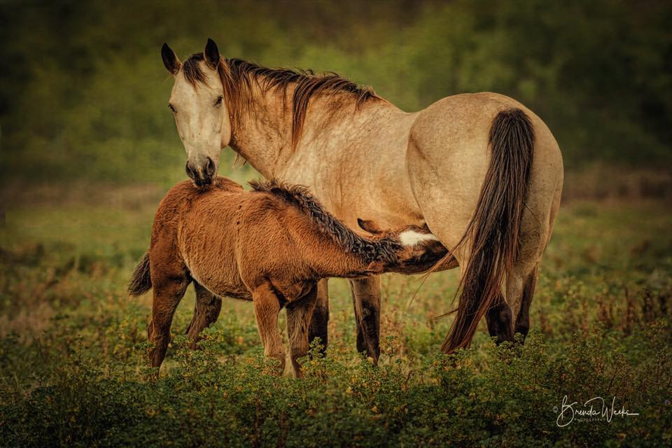 Mare and Her Baby