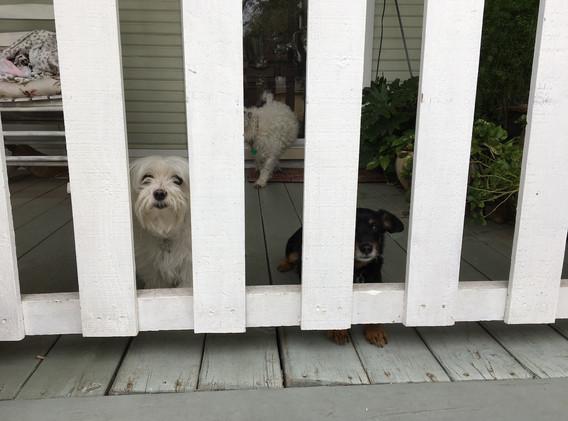 Closed porch gate