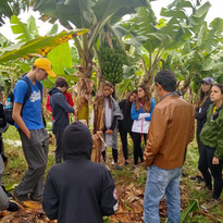 Produtores de Banana