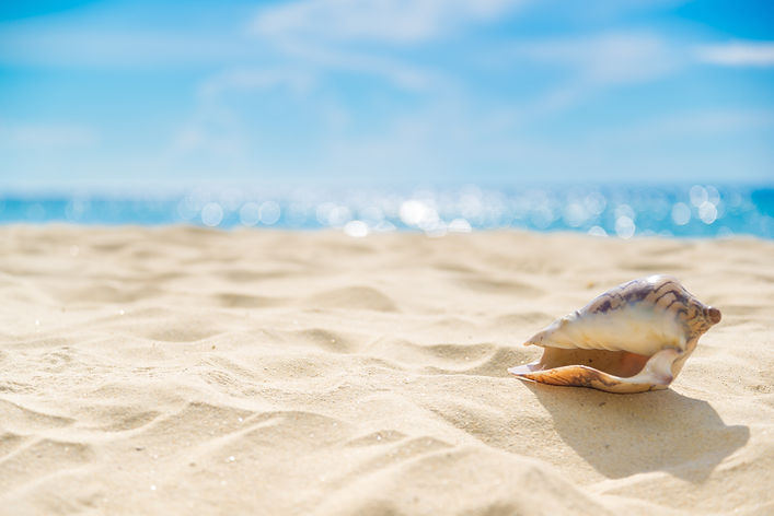 Shell on sand at beach and blue sky and