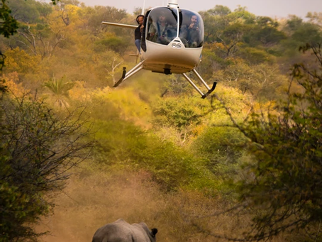 Rhino dehorning - a mix of emotions in unprescribed doses!