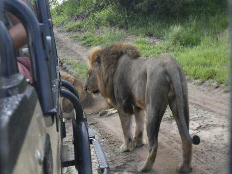 The wildlife playground of Khaya Ndlovu.