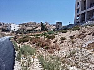 ارض للبيع في صافوط/ مرج البير - تحت قصر الاميرة بسمة ب660م