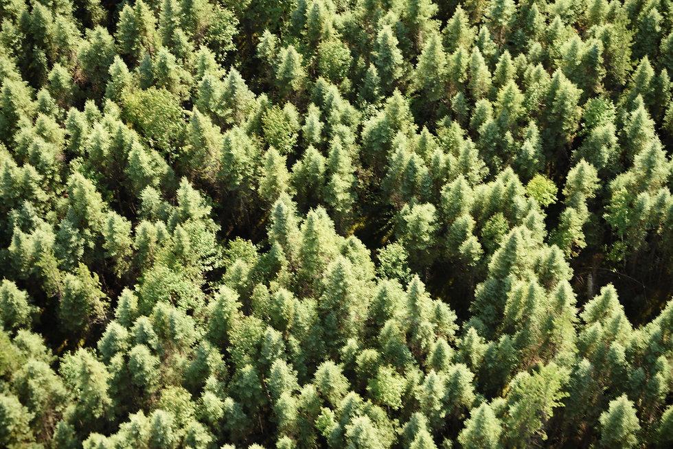 Aerial_Forest1.JPG