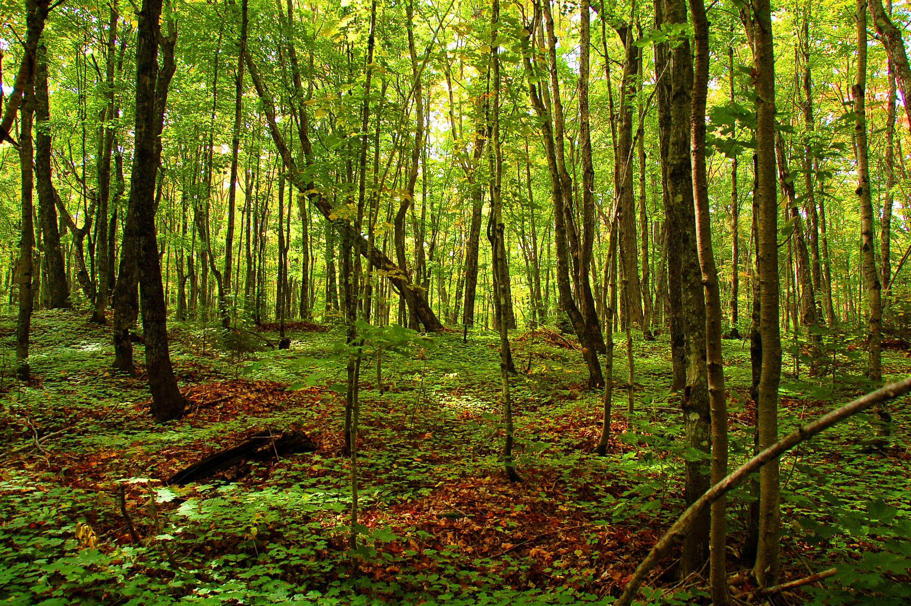 Forestry_Green.jpg
