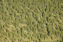Forest_wide_aerial_resize.JPG