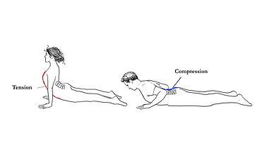 tension compression.jpg