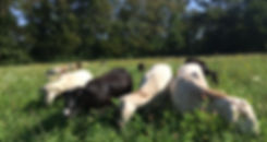 sheepfield.jpeg