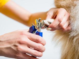 Você cuida das unhas do seu pet?