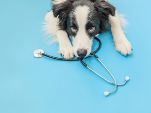 O que muda em um cão castrado?