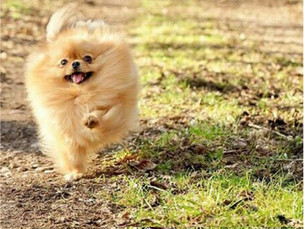 Fato: cães e pessoas que se exercitam são mais felizes e saudáveis.