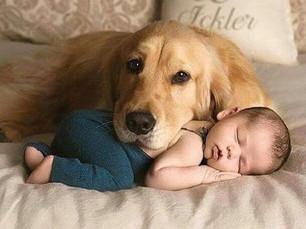 Preparando seu filho Pet para receber seu bebê humano.