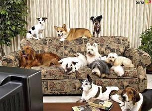 Cachorros e TV,  pode isso?
