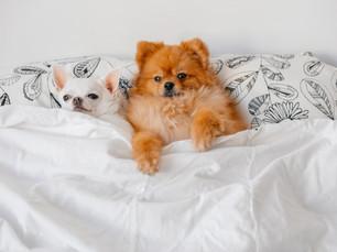 Os cães sonham? Você já parou para pensar a respeito disso?