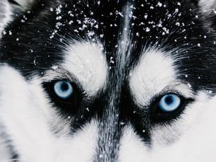 A cor dos olhos!