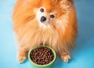 Imunidade Canina. Como manter/melhorar o sistema dos Lulus!