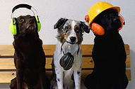 platsannonshund1.jpg