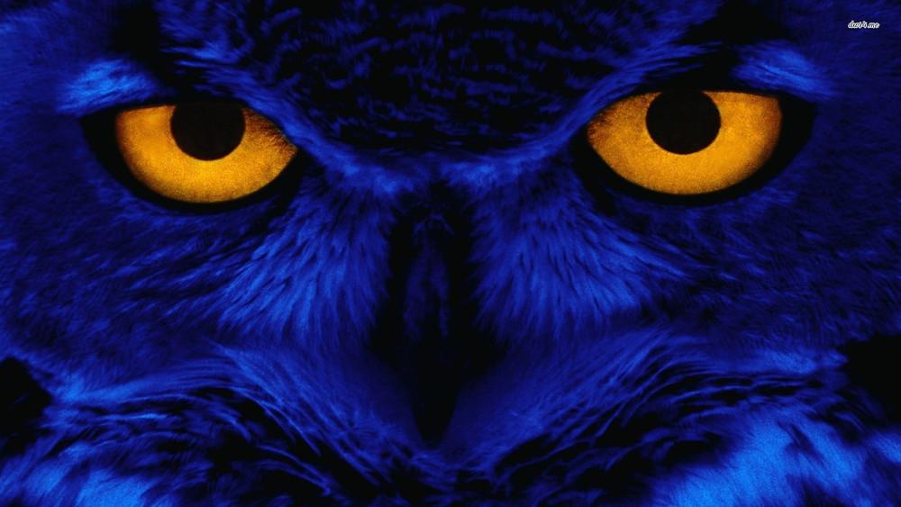 blue-owlet