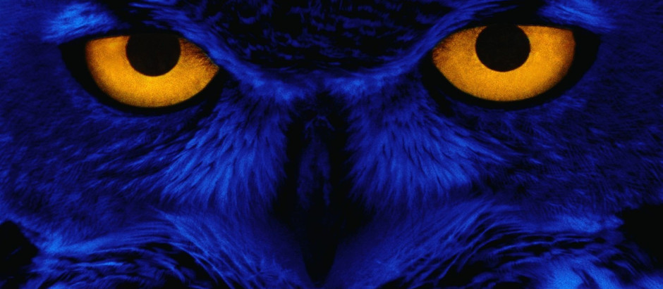 The Blue Owlet