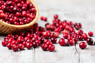 Harvest fresh red cranberries in wicker