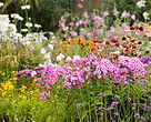 plantes_vivaces.jpg__1170x0_q85_subject_