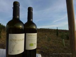 petermaurer-vino-ecologico-27