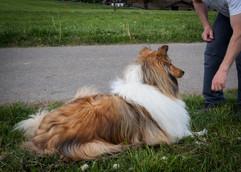 Tierhpysiotherapie Behandlung Hund