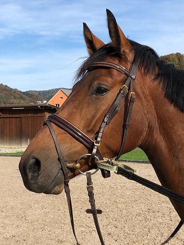 Pferd, Tierphysiotherapie Sabina Tierphysio-Praxis Oberland, Fällanden
