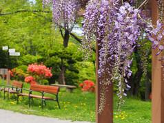 春の小樽公園
