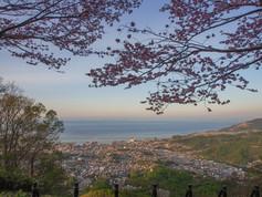 天狗山からの桜
