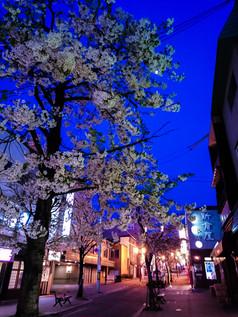 花園銀座商店街の夜桜 Cherry Blossom at the Hanazono-Ginza Street