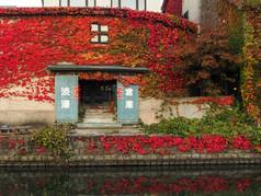 運河沿い倉庫の紅葉 Autumn leaves on the Warehouses