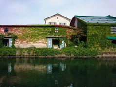 運河沿い倉庫の蔦 Warehouses coverd with ivyivied