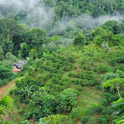 Hacienda Salome, Mayaguez PR