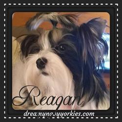 reagan20