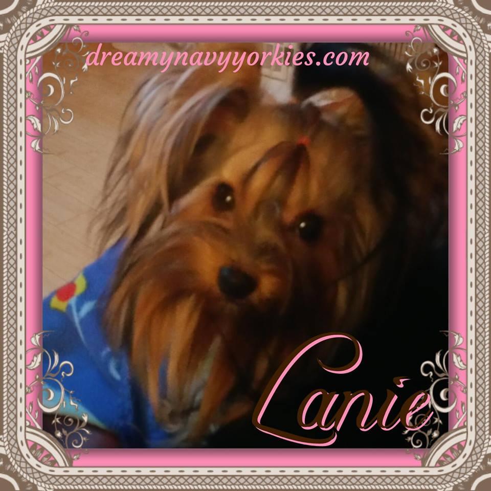 lanie5