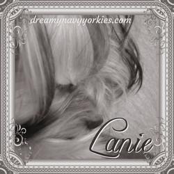 lanie6