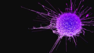 癌症的飲食謬誤(二)--採用「布緯療法」治療癌症?