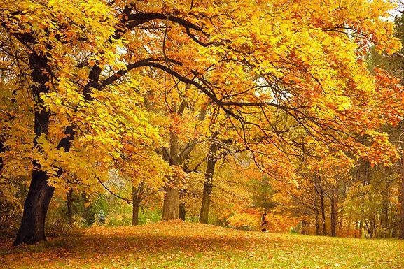 秋季如何養生?