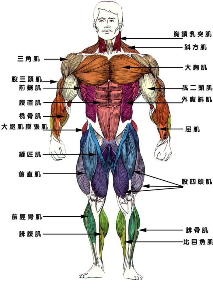 肌筋膜疼痛症候群|中醫