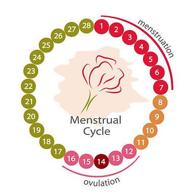 認識排卵障礙
